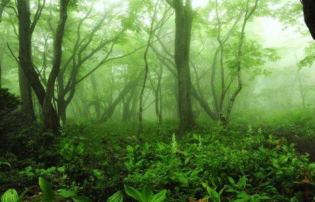 사려니 숲